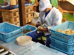 干し芋・乾燥芋 生産農家紹介